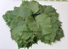 Frunze de vita-de-vie la saramura - Bunătăți din bucătăria Gicuței Cabbage, Plant Leaves, Vegetables, Plants, Food, Canning, Life, Essen, Cabbages
