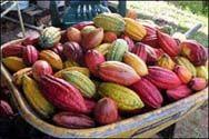 Tour Kona chocolate farm/factory