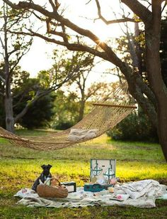 Hammock.  A dream afternoon picnic
