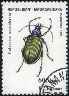 Madagscar  beetle, 1993