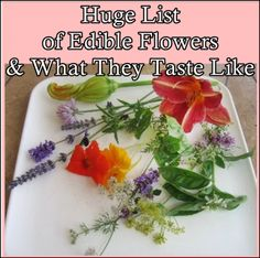 The Homestead Survival | Huge List of Edible Flowers and What They Taste Like | Wild Food Foraging - Wild Crafting - Homesteading - Gardening  http://thehomesteadsurvival.com