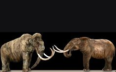 What's the Difference Between a Mammoth and a Mastodon?