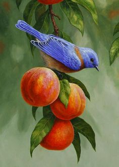 Bluebird and peaches greeting card. Artwork created from an original oil painting by wildlife artist Crista S. Pretty Birds, Beautiful Birds, Forest Art, Bird Pictures, Birds Photos, China Painting, Colorful Birds, Wildlife Art, Bird Prints