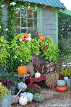 Potting Shed decorated for with pumpkins | homeiswheretheboatis.net #garden