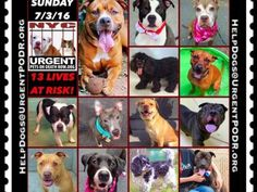 """7/3 Please Share! SUPER URGENT tap picture  BEAUTIFUL LIVES OF DOGS TO SAVE 7/3TO BE DESTROYED STARTING 12NOON PLEASE SAVE US WE ONLY HAVE A FEW MINS / HOURS TO LIVE BEFORE WE GO TO DOGGY HEAVEN THANK YOU PLEASE REPIN AND SHARE THIS INFORMATION  TIME IS CRITICAL THANK YOU IRISH : . Please share! The shelter closes at 8pm. Go to the ACC website( ASAP to adopt a PUBLIC LIST dog (noted with a """"P"""" on their profile) and/or work with a rescue group if you can adopt/foster ANY of our dogs on the…"""