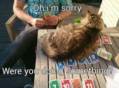 Een spelletje spelen zonder een kat die om aandacht vraagt? Impossible!   newsmonkey