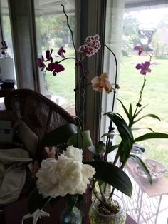 Orchids in FWC