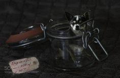 Dog in Jar de saardrahcir
