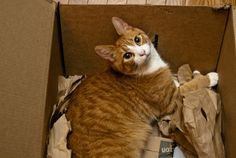 Check out our article about why cats love boxes!