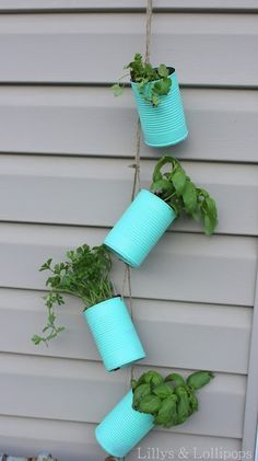 Great way to make a hanging herb garden if you don't have tons of space.  (Keeps them away from rabbits and ground hogs, but JUUSSTT the right height for a deer buffet)
