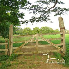 Caminos que recorren nuestras #HaciendasFranciaYLusitania - #BrahmanRojo #Montería #Ganadería #AmorporelBrahman #Colombia #Pasion @asocebu @fedegan