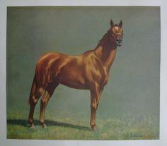 Horse Print. C.W. Anderson. Beautiful Chestnut. Vintage 1960s. Man o' War.