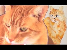 How to speed-paint a Tabby Cat in Watercolor, posing by housepet