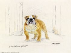 Bulldog by Gill Evans