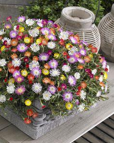 6 geschikte planten voor balkon/terras
