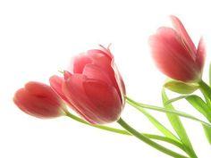 Inilah Makna dari Lukisan Bunga yang Jarang Diketahui