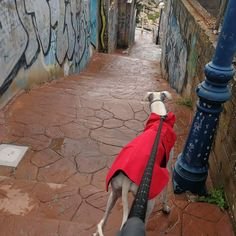 #Paseo con #Max 03/18. * * #Disfrutar #enjoying #enjoy #disfrutamos #Disfrutandoeldía #DisfrutandoAndo #Fotos #fotografia #photography #Foto #Photo #Peludos #Mascotas #Mascottes #Pets #Mascot #Dogs #Shaggy #Furry #Hairy #Ilovedog #Dog #Perros #Momentos #Gatos #Cats #gato #Ilovecats #Noalabandono #adoptanocompres #RincóndelaVictoria