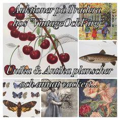 #plansch #bild #planscher #svenskdesign #auktion #antik #unik  Fynda Antika & Unika planscher på #tradera  #butterflyvintage