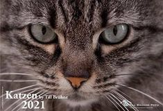 Katzenkalender 2021, tbfoto.de