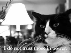 Henri The Existential Cat On Politics of the Day