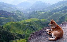 Dog View Landscape Desktop HD Wallpapers in HD