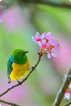 Kinds Of Birds, All Birds, Cute Birds, Pretty Birds, Little Birds, Beautiful Birds, Bird Pictures, Nature Pictures, Funny Animals