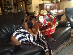 #dog #cane #juventus