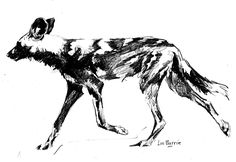 indulging in my passion for African wild dogs, wine, food, art and responsible tourism Black Pen Sketches, Animal Sketches, Animal Drawings, Dog Line Art, Dog Art, African Drawings, Africa Tattoos, Dog Anatomy, Safari