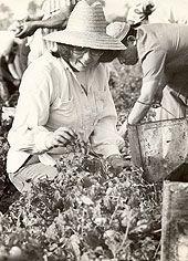 Vilma sonriente y con sombrero de guano participa en movilización agrícola