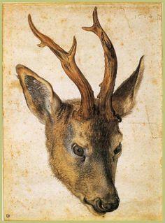 Head of a Stag, Albrecht Durer, c.1503