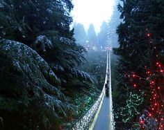 7 Top Christmas Attractions, Festivals, and Events in Vancouver: Capilano Suspension Bridge Canyon Lights German Markets, Stuff To Do, Things To Do, Suspension Bridge, Festivals, Vancouver, Attraction, Waiting, Canada
