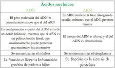 21 Mejores Imágenes De Biología Biología Adn Y Arn Y Adn