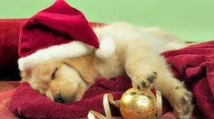 Cute Christmas Cat Wallpaper 6 Hq Wallpaper Widescreen in Animals 1600x900px #1350 - Imagecui.com