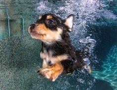 Las 11 mejores fotos de perros debajo del agua, ¡sin duda!
