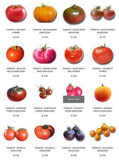 Heirloom Tomatoes seeds:  Brandywine, Cherokee Purple, Chocolate Cherry, Pineapple, and Indigo Rose. We have also added a few Hybrid tomatoes that are clearly identified as hybrid, Bush Early Girl, Celebrity, Better Boy and more.