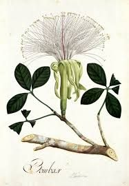 Resultado de imagen para stencil mariquitas y jardin