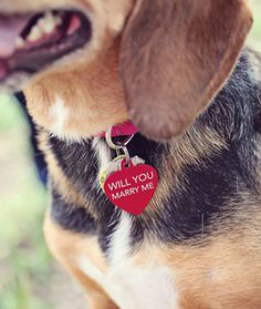 10 Engagement Proposals With Pets
