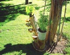 Kütük Şelale Plants, Plant, Planets