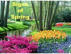 This PowerPoint presentation explains the spring season in simple terms using real, full-color photographs. Children will learn when the spring season occurs, the vernal equinox, what you see during the spring, what plants need to grow, and more. https://www.teacherspayteachers.com/Product/Signs-of-the-Spring-Season-PowerPoint-Presentation-1701589