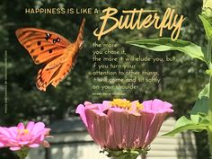 A photograph I took of a fritillary butterfly in my zinnia bed. The butterflies and the zinnias make me equally happy! VanessaLowry.com Graphic Quotes, Zinnias, Best Quotes, Butterflies, Photograph, Graphics, Bed, Happy, Photography