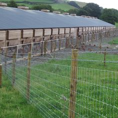 Poultry fencing - fencing designed specifically for free range chickens