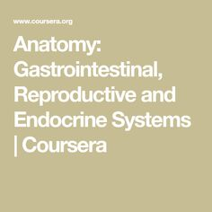 Anatomy: Gastrointestinal, Reproductive and Endocrine Systems | Coursera Musculoskeletal System, Endocrine System, Respiratory System, Final Grade, Mammary Gland, Pituitary Gland, Growth Hormone, Blood Vessels, Nervous System