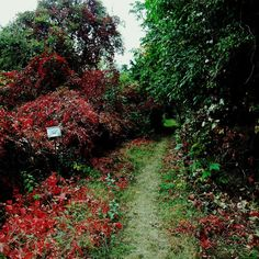 Shortcut.  #shortcut #autumncolours #fallcolors #redandgreen #brno #czech #morava #naturewalk #czechrepublic #czechphotography #czech_world #igerscz #hike #hiking #hikingadventures #hikingtrails #citywalk #hikingculture #hikinglife #naturelovers #naturepics #natureview #outdoors #outdoorlife #outdoorslife #view #scenery #sceneryshots #autumnday #photooftheday