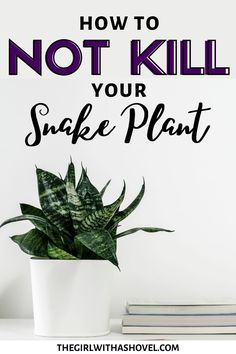 Do you love your snake plant?! Show it some real lovin' by making sure it stays alive! Check out this post on proper Snake Plant Care! Snake Plant Care | Indoor Snake Plant Care | Snake Plant Care Tips | Houseplant Snake Plant Care | Birds Nest Snake Plant Care | Moonshine Snake Plant Care | Dwarf Snake Plant Care | Snake Plant Care Water | Low Light Snake Plant Care Tips | Snake Plant Care Pots | Sansevieria trifasciata plant care | Sansevieria trifasciata plant care tips |
