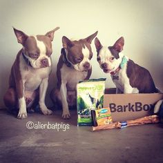 Barkbox makes dogs happy with their monthly delivery of dog goodies!