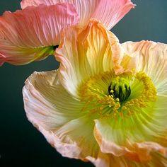 poppy schoen weiss blume gruen schwarz gelb _jil_ photocase kreative stockfotos