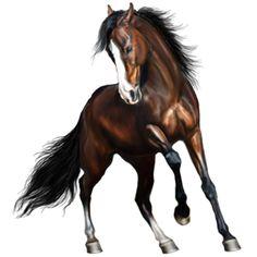 Riding Horse Arabian Horse Cherry bay Palomino, Friesian Horse, Cute Horses, Beautiful Horses, Horse Drawings, Animal Drawings, Horse Animation, Horse Armor, Horsemen Of The Apocalypse