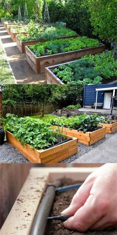 Detailed guide on how to build raised bed gardens! Lots of tips and ideas on best designs, soil, and materials for productive & beautiful DIY raised beds! A Piece of Rainbow backyard garden layout All About DIY Raised Bed Gardens – Part 1 Raised Garden Bed Plans, Building Raised Garden Beds, Raised Bed Garden Layout, Raised Bed Gardens, Raised Bed Diy, Small Garden Raised Beds, Raised Herb Garden, Backyard Vegetable Gardens, Vegetable Garden Design