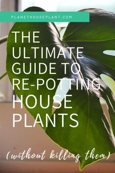 It can be a bit daunting repotting your precious house plants - what should you use as house plant p Big House Plants, Big Plants, Plant Projects, Garden Projects, House Plan Creator, Air Cleaning Plants, House Plant Care, Calathea, Carnivorous Plants