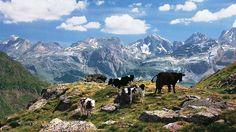 Pyrenees Tourism, Spain - Next Trip Tourism